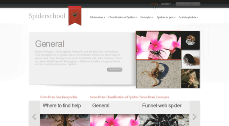 spiderschool.org