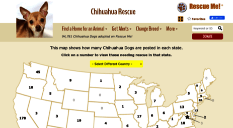 Visit Chihuahua rescueme org - ― Chihuahua Rescue ― ADOPTIONS